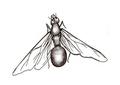 Tanajura, a fêmea da formiga saúva com o abdome cheio de ovos.pdf