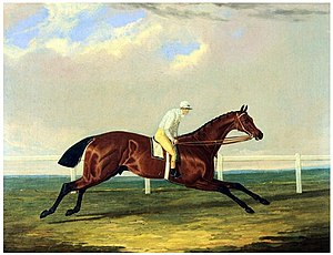 Tarrare (horse) - Tarrare with jockey George Nelson