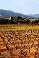 Terra de vinyes.jpg