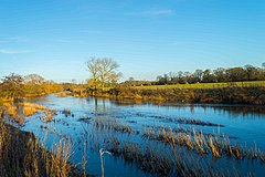 The Dorset Stour at Little Canford.jpg