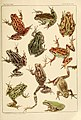 The Frog Book (1906) Color plate 08.jpg