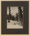 The Lions (HS85-10-38847) original.tif