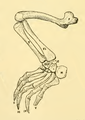 The Osteology of the Reptiles-206 fghg fgh fgh g fgh dh fgh rtv.png