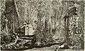 The Rajah Plate 6 (1883).jpg