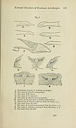 The annals and magazine of natural history - zoology, botany, and geology (1838) (14784561682).jpg