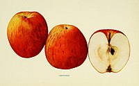 The apples of New York (1905) (19557805478).jpg