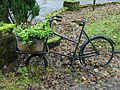 The bicycle as planter - geograph.org.uk - 1035501.jpg