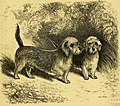 The dogs of the British Islands, being a series of articles on the points of their various breeds, and the treatment of the diseases to which they are subject (1878) (20801431538).jpg