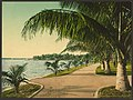 The walk at Palm Beach-LCCN2008678225.jpg