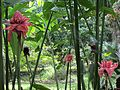 Torch ginger & spider web (7189941947).jpg