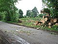 Tree-felling beside Woodrising Road - geograph.org.uk - 1348296.jpg