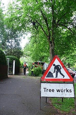 English: Tree Trimming, Queens Avenue, Dorches...