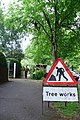 Tree Trimming, Queens Avenue, Dorchester - geograph.org.uk - 803788.jpg