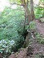 Tree in old quarry - June 2012 - panoramio.jpg