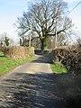 Tree on Hogg Lane - geograph.org.uk - 340754.jpg