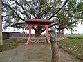 Tree shrine near buffalo arena 03.jpg