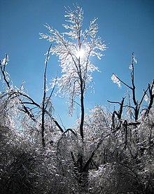 Trees-Ice Storm-Dec 2007-St Jo MO.jpg