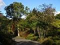 Trees on Main Drive, Exbury Gardens - geograph.org.uk - 1011764.jpg
