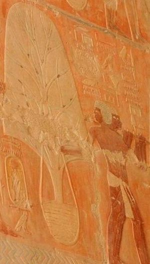 Hatshepsut - Trade with other countries was re-established; here trees transported by ship from Punt are shown being moved ashore for planting in Egypt—relief from Hatshepsut mortuary temple