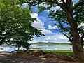 Trees with Kulam.jpg