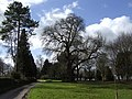 Treescape at Lus Hill - geograph.org.uk - 357163.jpg