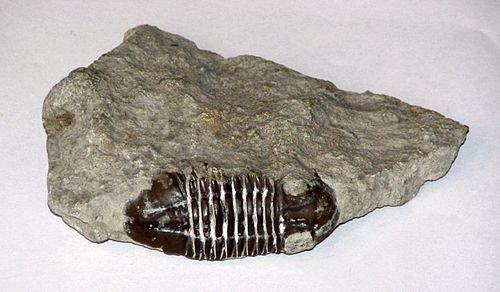 dating fossiileja miljoonia vuosia vanha