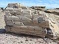Tronco fosilizado.jpg