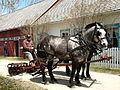 Tructor Show in Mennonite Heritage Village Steinbach Manitoba Canada 1 (3).JPG