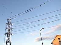 Tuira powerlines 20061014.JPG