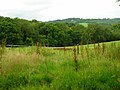 Twenty Acre Wood - geograph.org.uk - 505773.jpg