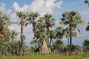 Oshana Region - Typical landscape of Oshana Region