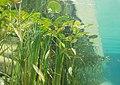 Underwater-photography-pond-plants-1529207.jpg