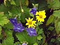 Valley of flowers National Park 30.JPG