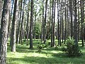 Vormsi kalmistu 04.jpg