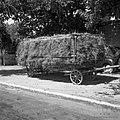 Voz na gare naložen s senom, Markovščina 1955.jpg