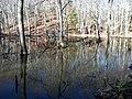 WE Beaver Pond 2 (8377226913).jpg