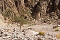 Wadi Gnai 2020-03-08-9.jpg