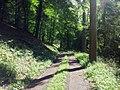 Waldweg entlang des Kuttbachs und der Stadtgrenze Triers - geo.hlipp.de - 37713.jpg