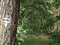 Waldweg im Grunewald (Forest Path in Grunewald) - geo.hlipp.de - 26247.jpg