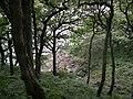 Walk along from Lawrenny - geograph.org.uk - 67104.jpg