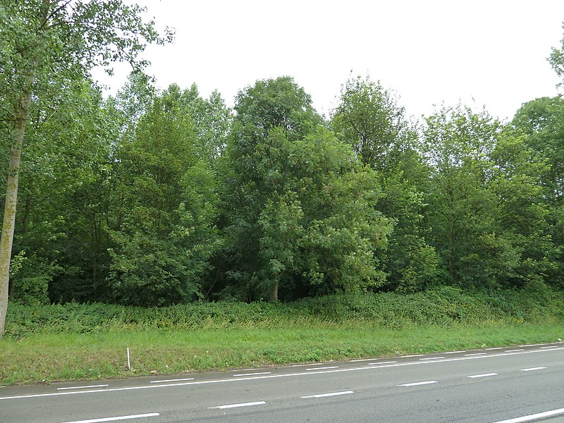 Tumuli du Bois des Tombes, Waremme, Belgique