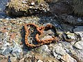 Washed Up Rope, Scabbacombe Sands.jpg
