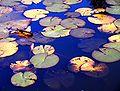 Water Garden 01.jpg