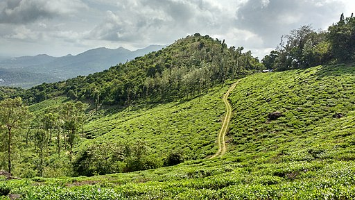 Wayanad, India
