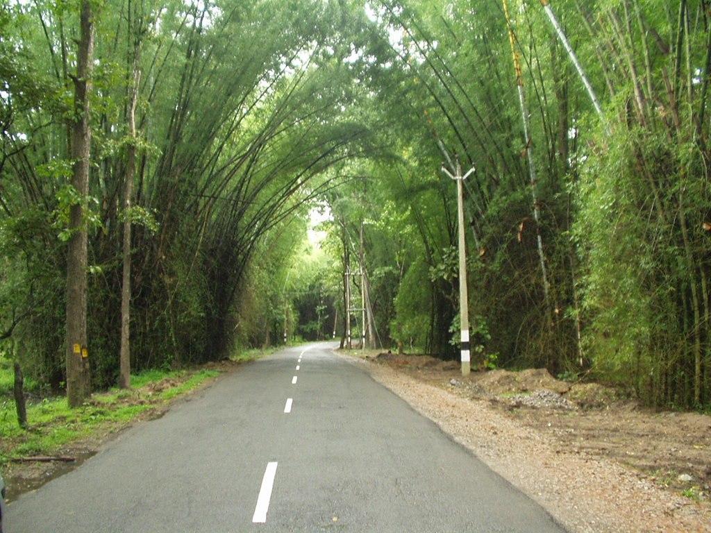 Waynad Bamboo Road