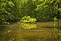 Weiher, Landschaftsschutzgebiet Nagoldtal, Kennung 2.35.037, 01.jpg