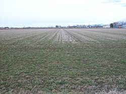 An agricultural field in West Weber, March 2011