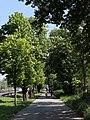 Wien-Hietzing - Naturdenkmal 350 - Hofjagdalle II.jpg