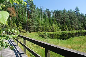 Wigry National Park - Footbridge over the swamp and Suchar