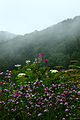 Wildflowers-after-rain-foggy-mountains - West Virginia - ForestWander.jpg